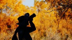 Лес euphratica Populus в Синьцзян стоковое фото rf