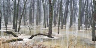 Лес Flloded в зиме Стоковые Изображения