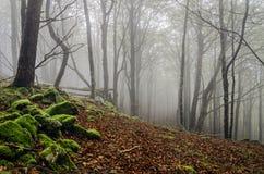 Лес Fogy Стоковые Фотографии RF