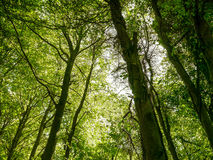 Лес Friston Стоковые Фотографии RF
