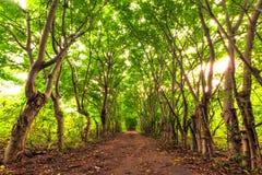 Лес Gili Trawangan, Индонезии стоковые изображения rf