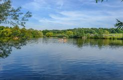 Лес Hainault, Essex, Великобритания - 28-ое августа 2017: Девушки в rowing Стоковые Фото