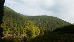 Лес Hardenburg Стоковое Изображение RF