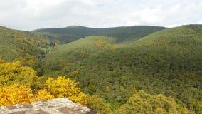 Лес Hardenburg Стоковое фото RF