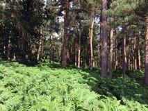 Лес Harewood северного Йоркшира Стоковая Фотография