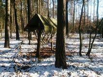 Лес Hayrack Стоковые Изображения