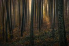 Лес i сказа стоковое фото rf