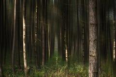 Лес II сказа стоковые фотографии rf