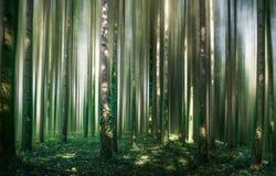 Лес III сказа стоковая фотография