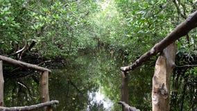 Лес Jozani, Занзибар стоковые изображения rf