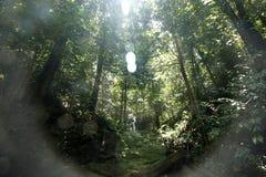Лес Kawang тропический Стоковое Изображение