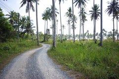 Лес Kood Koh стоковое фото