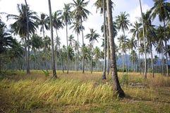 Лес Kood Koh стоковая фотография