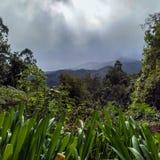 Лес Laurisilva в острове Мадейры штормовой погодой стоковое фото