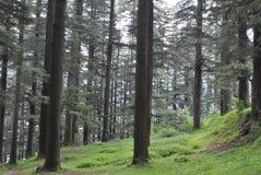 Лес Manali Deodar himachal - древесины зелены и чисты Стоковая Фотография RF