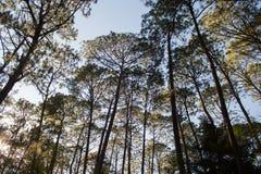 Лес Mazamitla в Мексике, Халиско стоковое фото