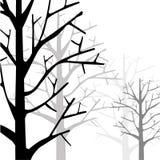 Лес Monotone Стоковое фото RF