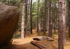 Лес Mt Кроуфорда Стоковое Изображение