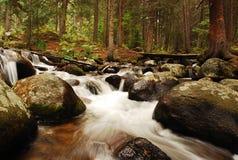 Лес Mt Эванса Стоковые Изображения RF