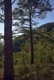 Лес Paphos Стоковое Изображение RF
