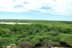 Лес rameswaram взгляд сверху Стоковое Фото