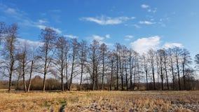 Лес Riparian в севере Берлина в зиме Стоковые Изображения