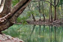 Лес Riparian Стоковые Фотографии RF