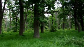 Лес Sababurg в Германии видеоматериал