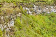 Лес Scalesia, Галапагос, эквадор Стоковые Фотографии RF
