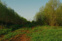 Лес scrub природа переулка Стоковая Фотография RF