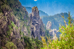 Лес Shennongjia Стоковые Фото