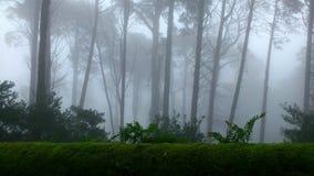 Лес Sintra Стоковая Фотография
