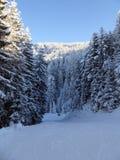 Лес Snowy в австрийце Альпах Стоковая Фотография RF