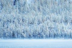 Лес Snowy на береге стоковое фото