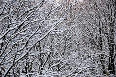 Лес Snowy, Онтарио Канада Стоковое Изображение