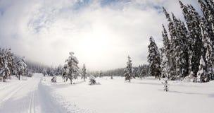 Лес Snowy увиденный от piste стоковая фотография rf