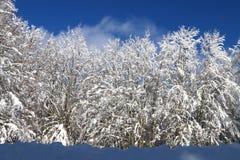 Лес Snowy Стоковое фото RF