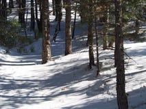 Лес Snowy стоковая фотография