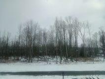 Лес Snowy Стоковые Изображения RF