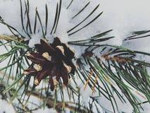 Лес Snowy Стоковые Фото