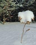 Лес Snowy Стоковое Изображение