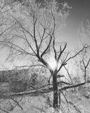Лес Snowy Стоковое Изображение RF