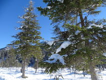 Лес Snowy Isartal Стоковые Изображения