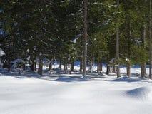 Лес Snowy Isartal Стоковое Изображение