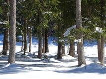 Лес Snowy Isartal Стоковые Изображения RF