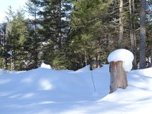 Лес Snowy Isartal Стоковые Фотографии RF