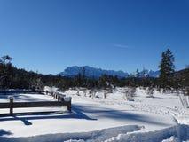 Лес Snowy Isartal Стоковая Фотография RF