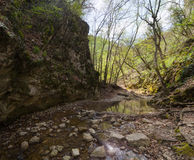 Лес Spribg Стоковая Фотография