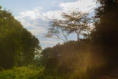 Лес Sunlights Стоковое Изображение