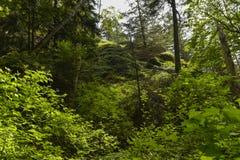 Лес Verdent Стоковое Изображение RF